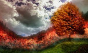 Incendio boschivo: bosco in fiamme