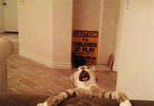 i gatti e non mollare mai!