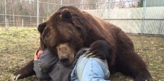 gli orsi