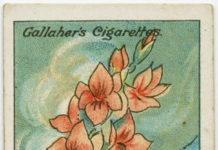 soluzioni quotidiane: ridare vigore a fiori recisi