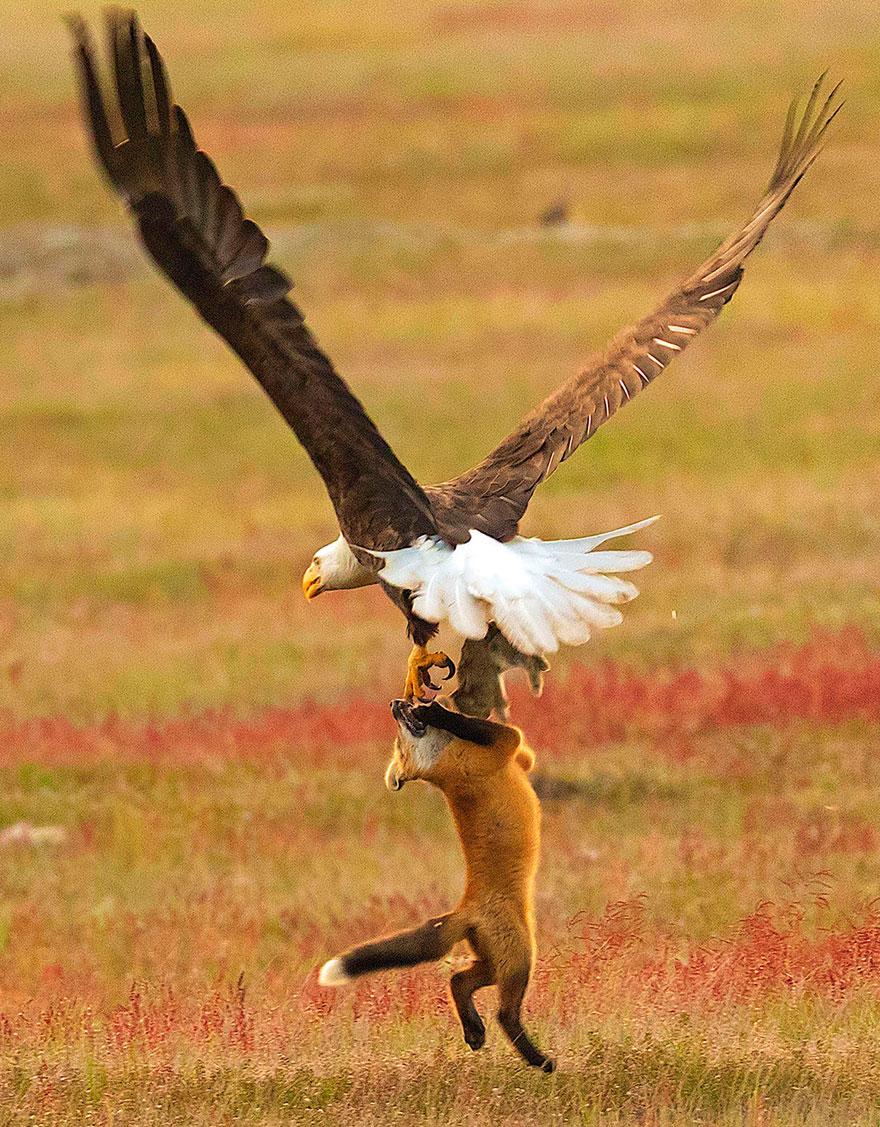 la natura: sequenza di uno scontro epico 7