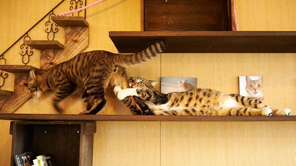 i gatti e le love stories