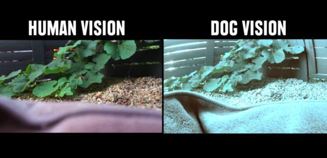 percezione visiva: visione umana e canina a confronto