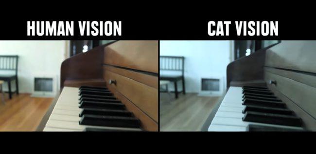 percezione visiva: visione umana e felina a confronto