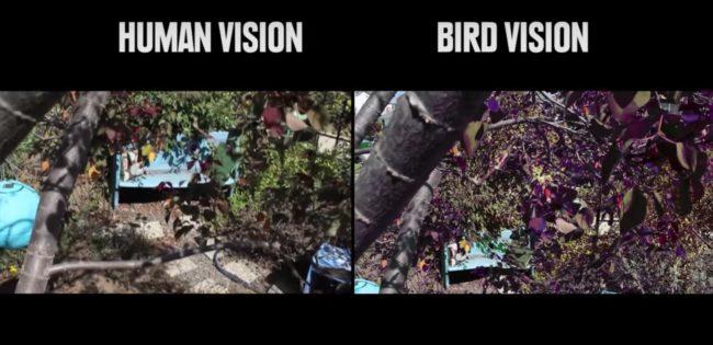 percezione visiva: visione umana e di un uccello a confronto