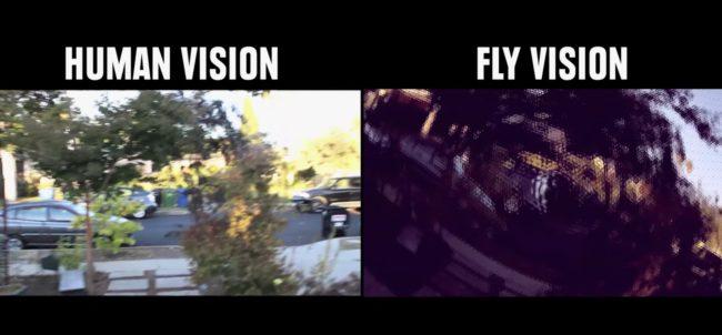 percezione visiva: la visione delle mosche, frammentata ma con moviola inclusa!