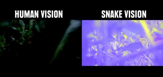 percezione visiva: la visione termica dei serpenti, che tracciano le loro vittime nella notte.