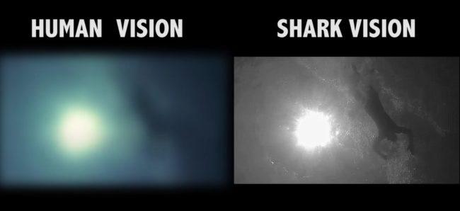 percezione visiva: la visione cristallina degli squali sott'acqua