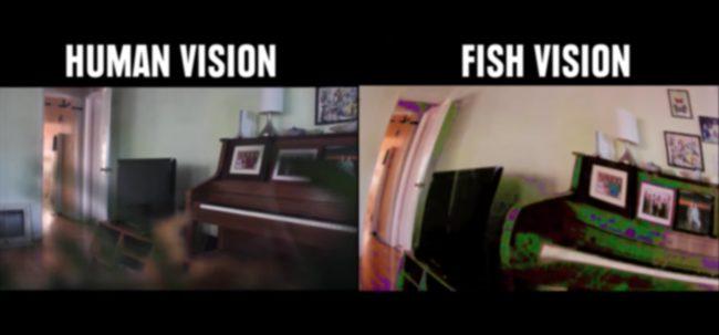 percezione visiva: la visione dei pesci, RGB ma utravioletta