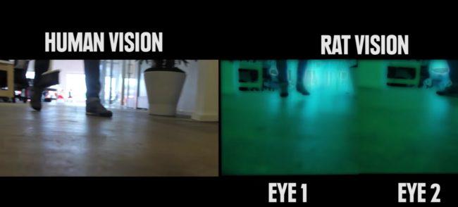 percezione visiva: la visione dei ratti, una moviola sfocata