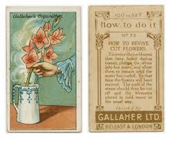 soluzioni quotidiane: rianimare  i fiori recisi