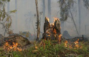 Incendio boschivo: tronco