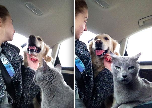 I gatti e la sufficienza