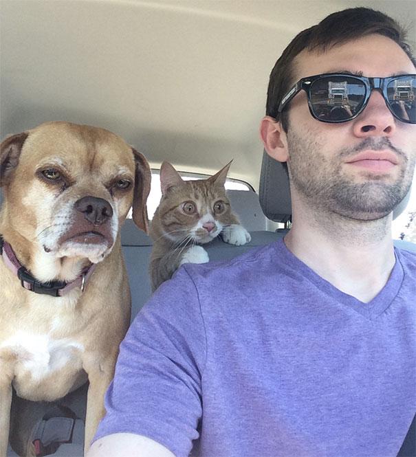i gatti e i road trip