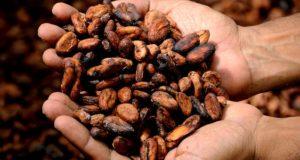 I semi per fare il cioccolato