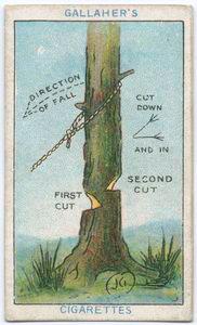 soluzioni quotidiane: come tagliare un albero senza incidenti