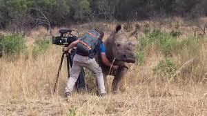 animali selvaggi: la natura che ci ricorda cosa siamo