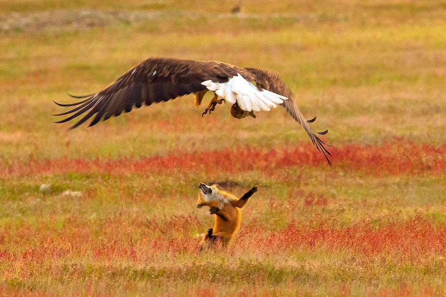 la natura: sequenza di uno scontro epico 8