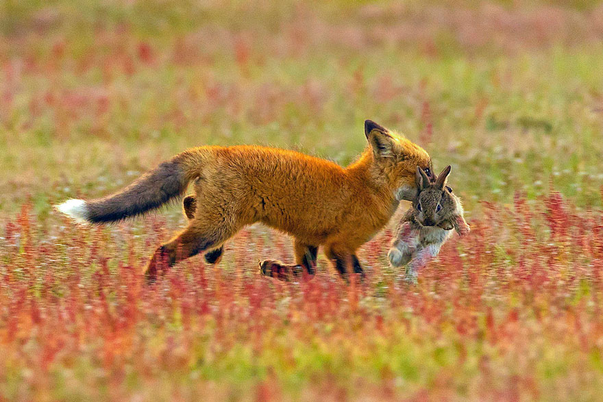 la natura: sequenza di uno scontro epico 1